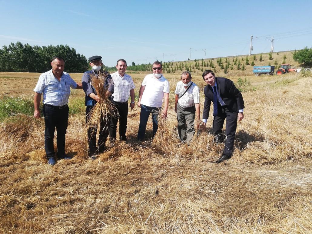 Tekirdağ'da 10 Bin Yıllık Siyez Buğdayı Hasadı Yapıldı