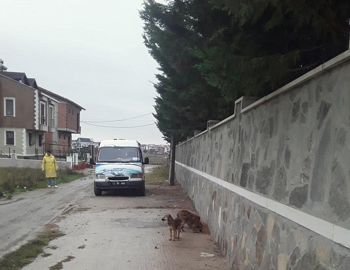 Marmaraereğlisi Belediyesi Soğuk Kış Günlerinde de sokak hayvanlarının yanında